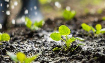 Piano di sostenibilità